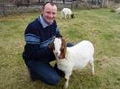 Schafe und Ziegen_20